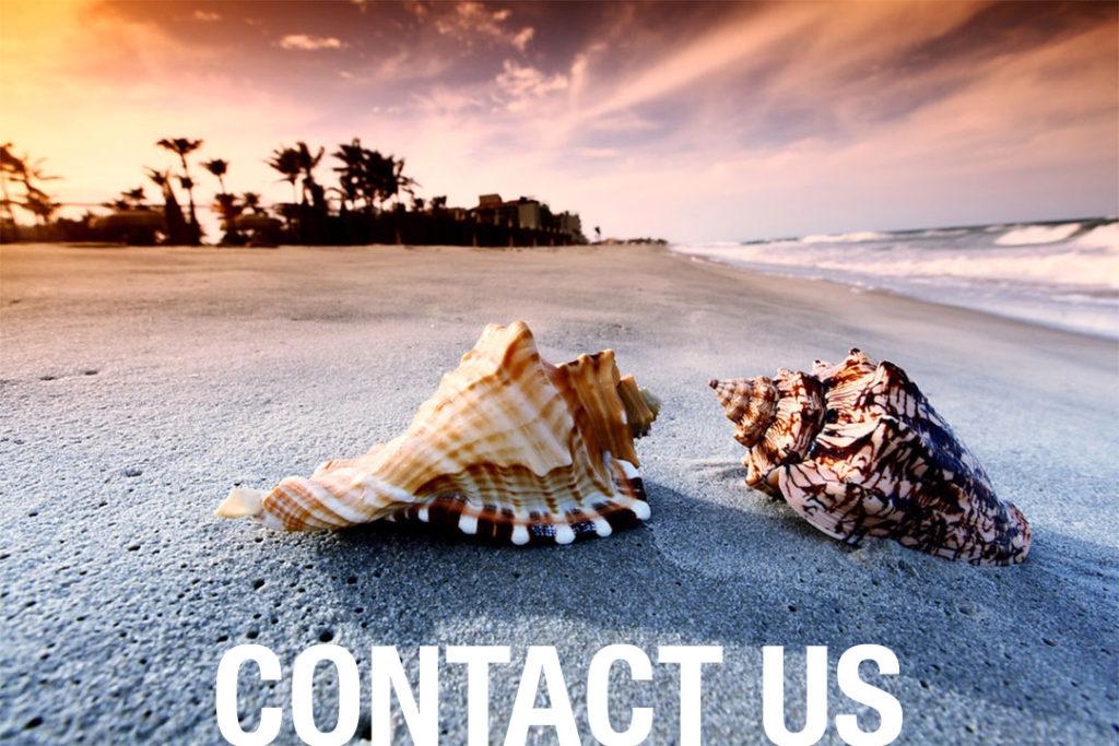 Conch on a beach
