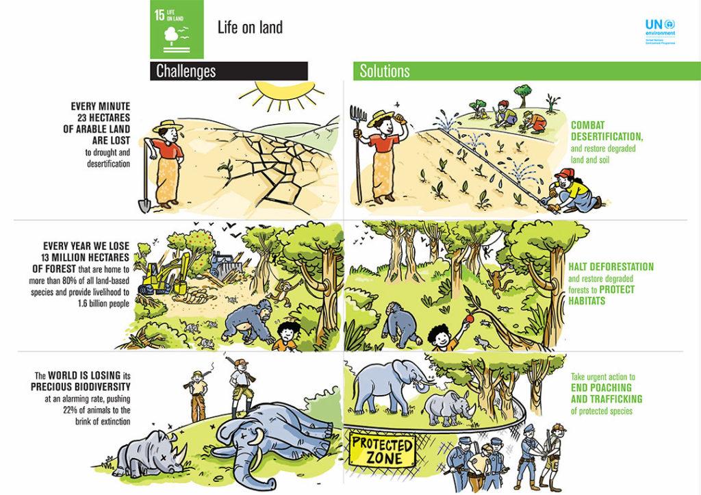 UN SDG15 Infographic